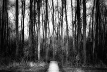 Beauty in Black and White / Fine art nature and landscape photography in black and white by Ohio Photographer Jim Crotty