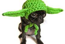 Cute pet pics / by Tami Eldridge