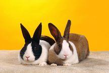 Top Cute Beautiful Lovable Rabbits Photos