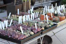 best.practices.succulents