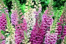 Cottage garden flowers / Beautiful flowers.