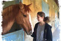 Αλογα - Horses