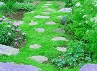 Glorious Groundcovers / Have a space where grass won't grow? A slope that needs some erosion control? A walkway that would look great with something between the cracks? Groundcovers are a great option! www.meadowsfarms.com