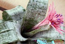 Bromeliads we love