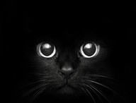 ♥➷♥•  Cats / Cats have it all - admiration, an endless sleep, and company only when they want it.