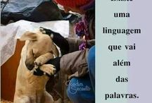 Cachorrinhos frases