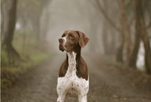 Hunting dogs / All breeds