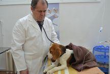 Veterinar de SUCCES / Ei sunt medicii veterinari romani care practica profesia cu daruire. Fa cunostinta cu ei si vezi ce se ascunde in spatele uniformei de medic.
