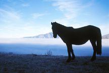 Nacht paard