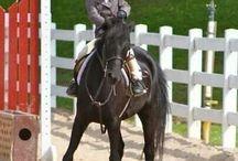 - Equestrian -