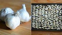 cesnakove a cibul.korenie
