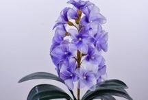 Jàcint - Hyacinth