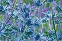Plants I like / by Debbys Garden Links