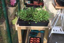 Lib's greenhouse