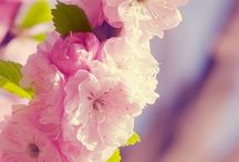 Flowers / Beauty of nature