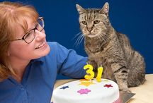 World's Oldest Cat / Unofficially world's oldest cat just celebrated her 31st birthday(141 in human years). He chose his humans unlike humans choose their cat