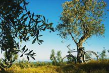 Toscana  / Home sweet home