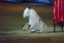 ~ Horse ~