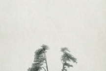 Rooted to the Sky / by Wilhelmiina
