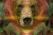 bear ~ spirit guide ~