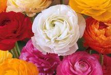 Blog Parlons fleurs avec béa