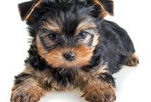 My future pets