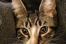 Music Business Cat / by Loren Weisman