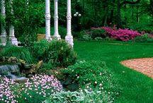Garden & Gardening. Backyard