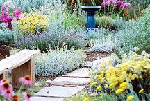 Lucious Lawn / Yard/garden ideas