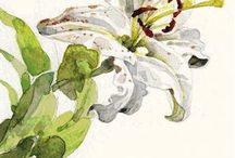 40+ Wildlife Artist, Pittori Botanici e Illustratori Naturalistici Italiani