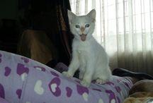 gatitos / Mi bebe
