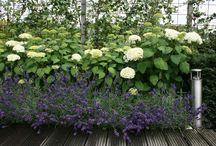 Mooie combi tuinplanten