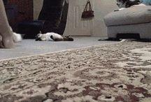 き:cat