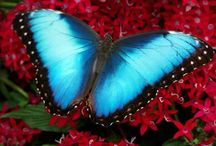 Beautiful Butterflies ;)