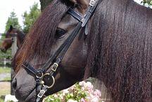 Horses - breeds