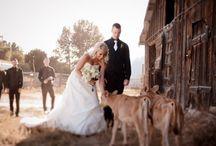 Wedding photography with farm animals