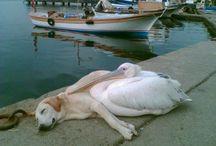 állati furcsaságok