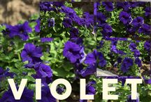 Free Flowers Images for Commercial Purpose