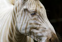 Horse of a different color / by Potter Park Zoo