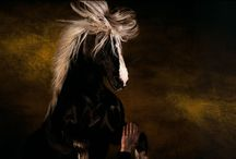 Horses / The horse. One of my favorite animals. The others are hounds (dogs) and hamsters