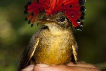inspirational birds / bird photography