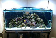akvaarioon