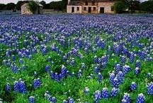 Texas born, Texas proud / by Debby Douglas