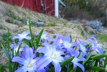 My Garden Photography