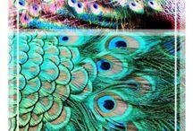 Peacocks / by Ursula Dellamar