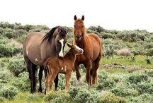 Wild horses / About powerfull wild horses