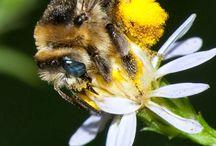Honey Beez Buzz