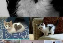 Hearted cats