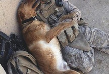 Man's Best Friend / Dogs, dogs and more dogs. Don't you think they look like their human companions?