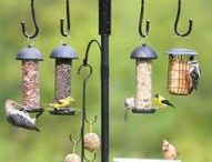 Bird table fun / Recipes and ideas for the feathery one